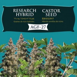 hybrid_castor_agf-27