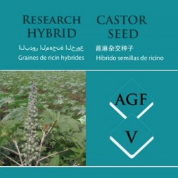 hybrid_castor_agf-v